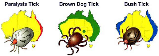 Types and distribution of ticks in Australia